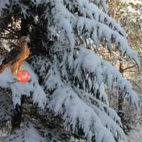 Free online flash games - EscapeFan Winter Wonderland Forest Escape 2 game - Games2Dress