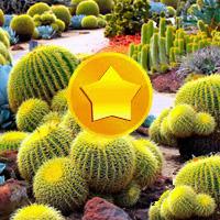 Free online flash games - Treasure Hunt-Cactus game - Games2Dress